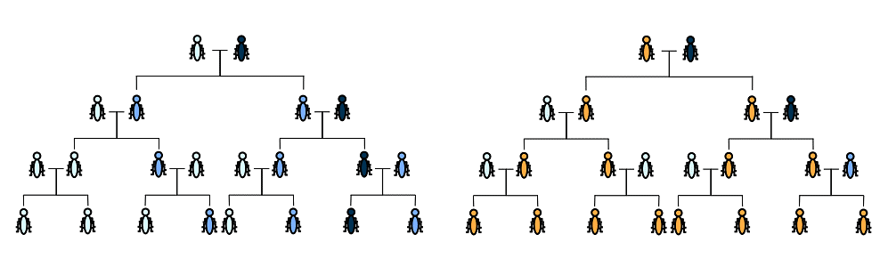 Normal inheritance and Gene Drive inheritance